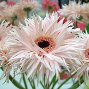 Gerbera - nasz kwiat miesiąca!