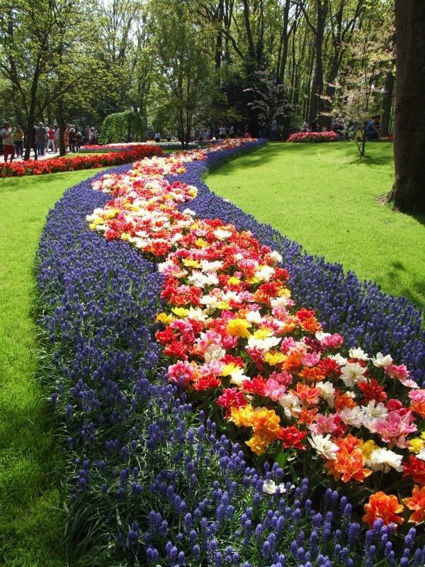 Jak dbać o kwiaty cebulowe