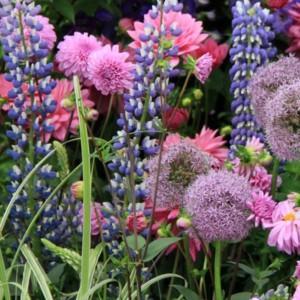 kwiaty witryna