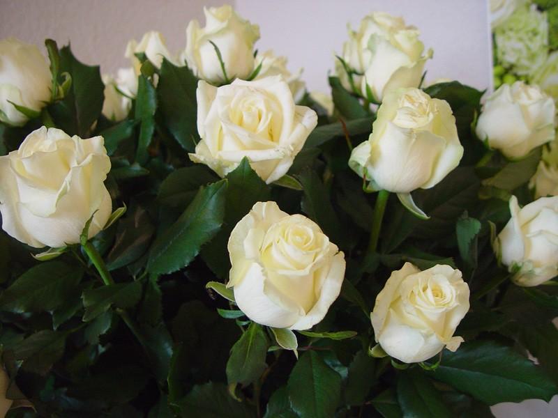 Róża Savita