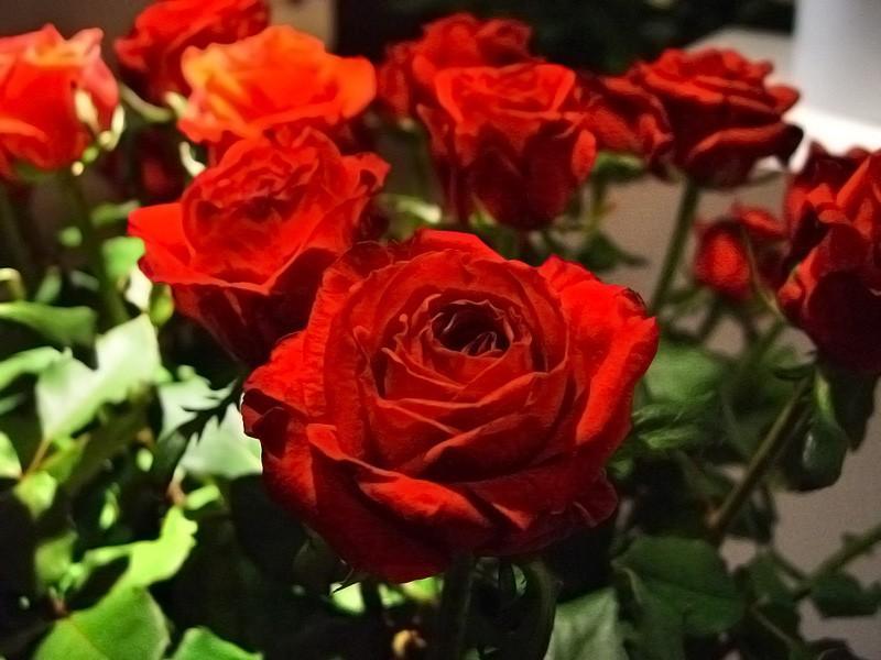 Róża Harper