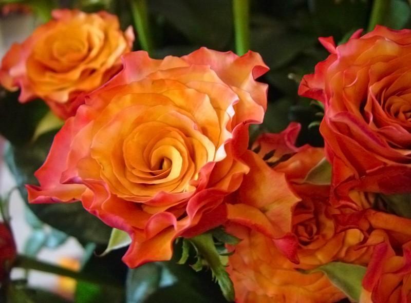 Róża Single Malt