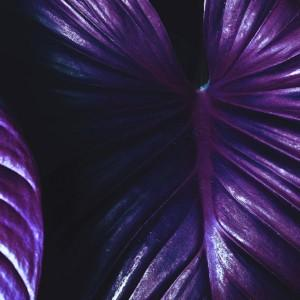 trend ślubny ultraviolet