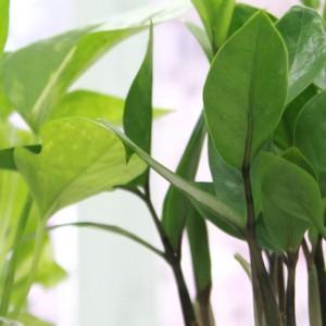 Rośliny lubią, gdy się do nich mówi. A co jeśli zaczniemy je obrażać?