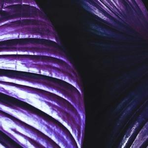 ultra violet trend