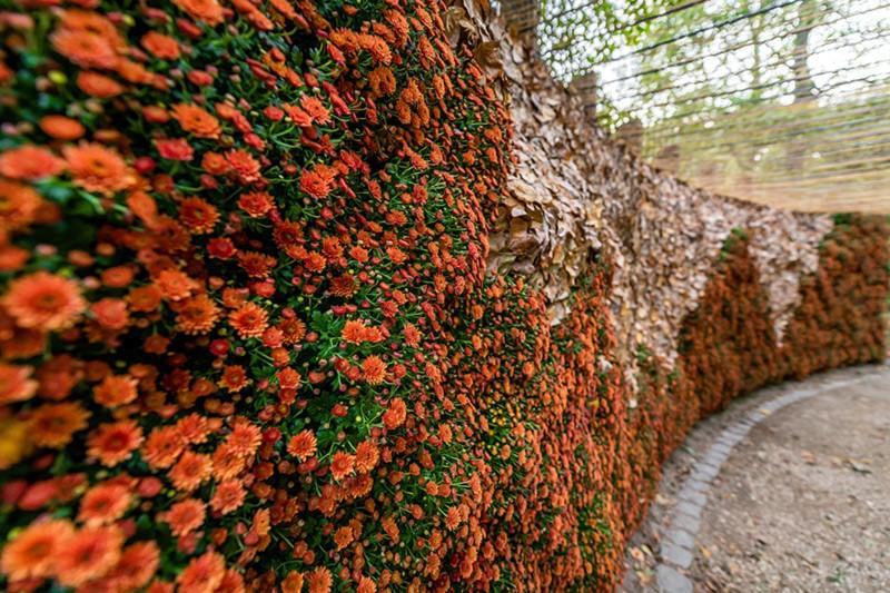 Duża forma florystyczna, ogrody japońskie