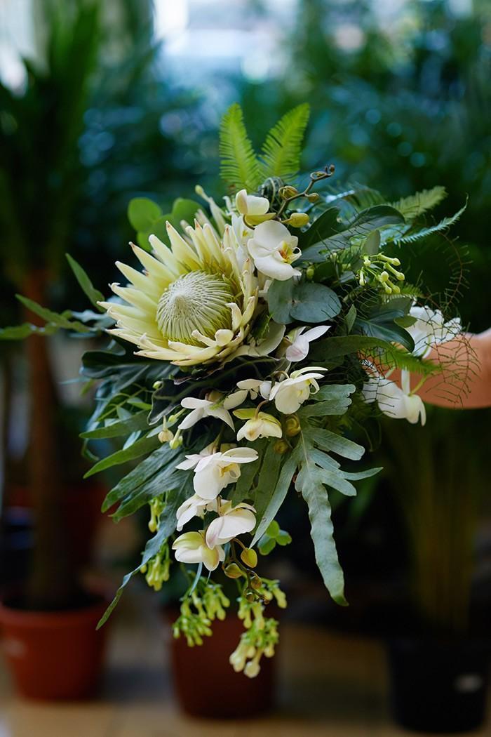 Protea 'Arctic White'