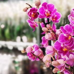 JMP Flowers otwiera filię w Białymstoku