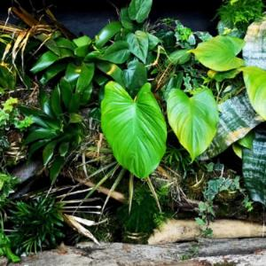 Just in Nature - zielona ściana pod ladą