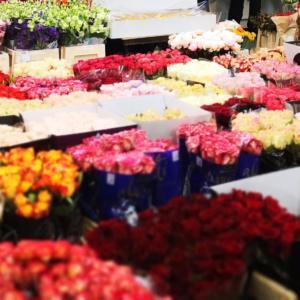giełda-kwiatowa