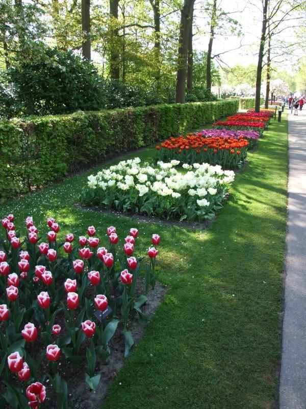 Zwiedzamy ogrody Keukenhof – przewodnik dla wtajemniczonych