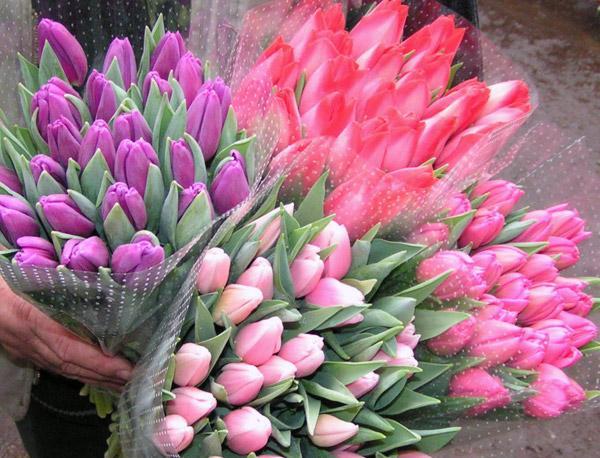 Tulipany pęczkowane po 25 sztuk