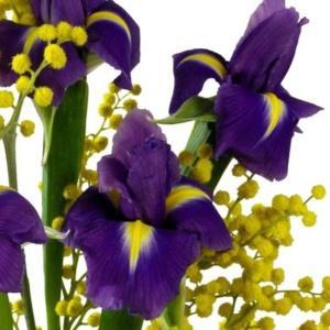 Irys - piękny i elegancki zwiastun wiosny