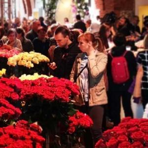 Ponad 20 000 róż na Zamku Królewskim w Warszawie