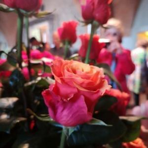Królewska Wystawa Róż 2019
