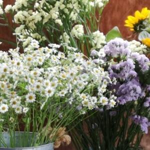 Letnie kwiaty idealne dla twojej kwiaciarni