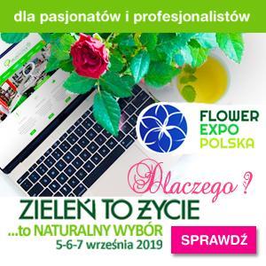 flower expo targi florystyka