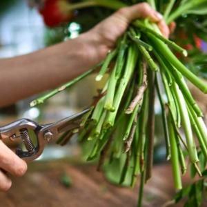 Wynagrodzenia w kwiaciarniach. Ile zarabia dobry florysta w Polsce?