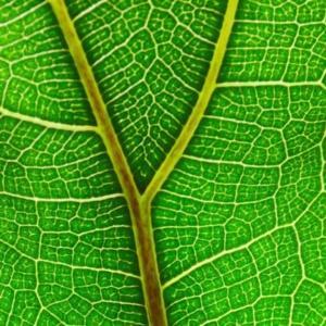 Fikus: wrześniowa roślina miesiąca