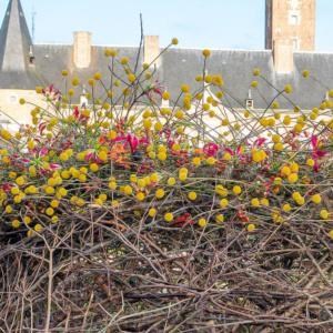 Fleuramour, czyli florystyczny powrót do przyszłości