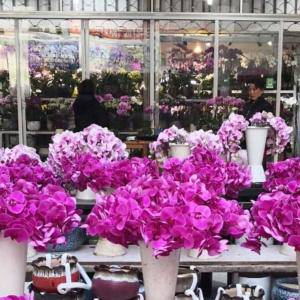 Jak wygląda giełda kwiatowa w Shanghaju?