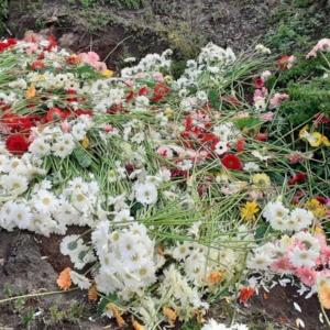 fot. www.gaiaflorum.com