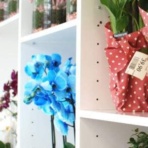 kwiaciarnia samoobsługowa