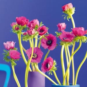 Inspiracje z NDiO-Flora? Naturalnie!
