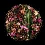 Hanneke Frankema, Floral Fundamentals inicjatywa Home Stay
