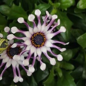 15 modnych letnich kwiatów doniczkowych, które znajdziesz w każdej hurtowni florystycznej