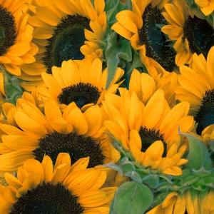 Które kwiaty cięte najlepiej się sprawdzą w upalne dni?