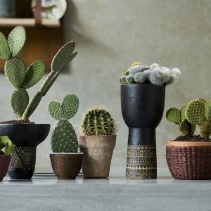 Kaktus, idealna roślina doniczkowa na sierpień!