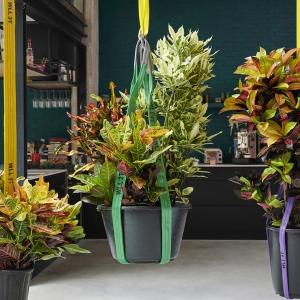 Kroton: roślina doniczkowa miesiąca na październik 2020