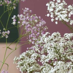 Gipsówka: ulubiony wypełniacz kompozycji florystycznych